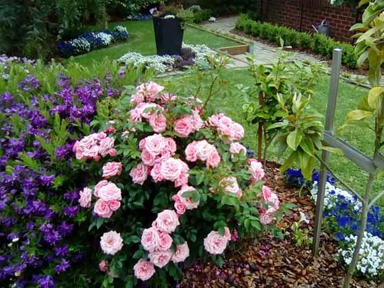 Gardening Warragul